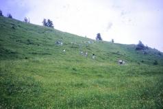 CVAV_1992_ChateauDoex_10030