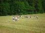 2010 - Camp à Jaun